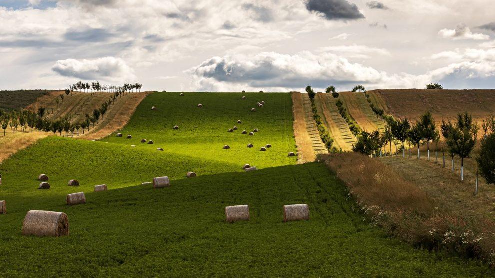Krajina: Moravské Slovácko Léto 2021